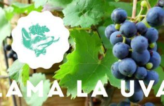 Cata online de vinos andaluces en Lama La Uva