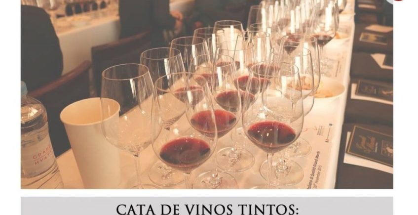 Cata de vinos tintos
