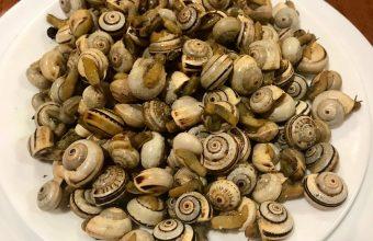 Los caracoles de Casa Protasio