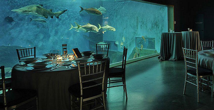 El 23 de agosto y el 13 de septiembre, cena entre peces