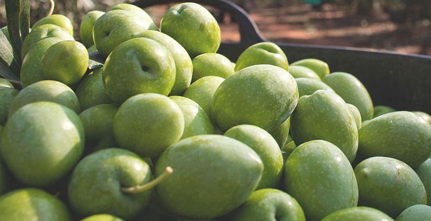 Benacazón celebrará su I Feria Agroalimentaria y Olivarera del 18 al 20 de enero