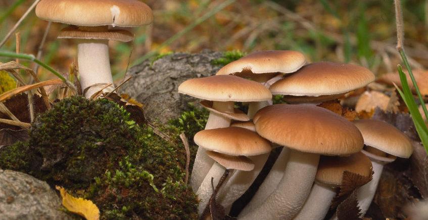 Taller de cocina micológica. 14 de diciembre. La Puebla de los Infantes