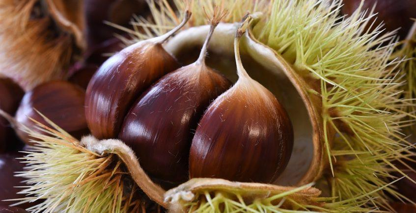 Platos y rutas con sabor a castañas en Constantina