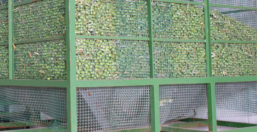 Sopas tostas, aceite y chacinas llenan de sabor el Puente de Diciembre en Coripe