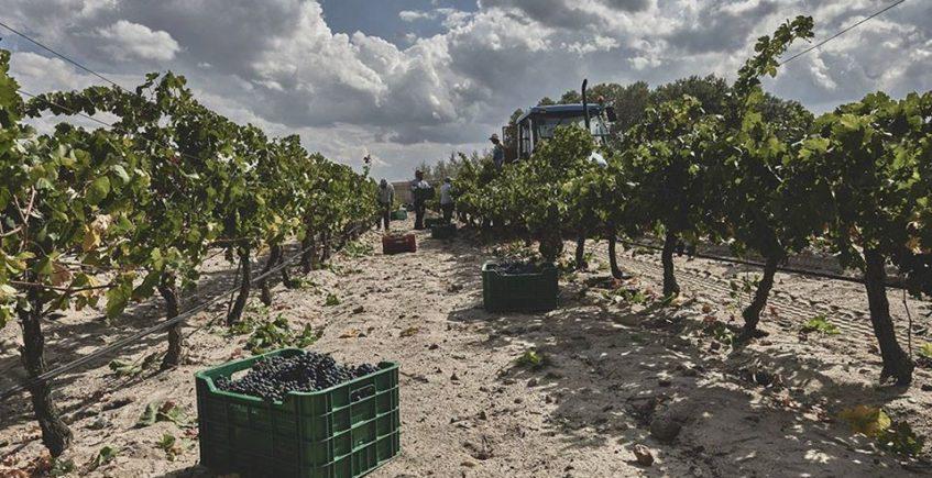Cata de vinos ecológicos, biodinámicos y naturales. 30 de enero. Sevilla.