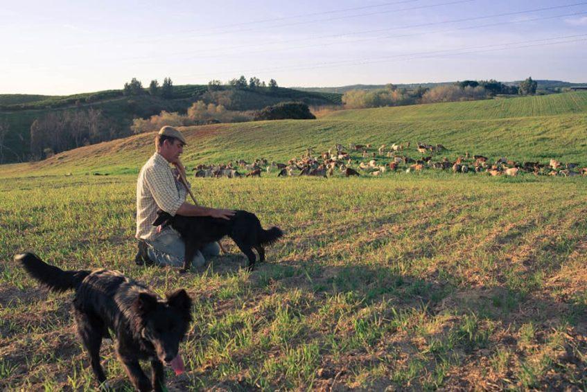 Pepe Villalba con su ganado de cabras floridas sevillanas. Foto cedida por el establecimiento