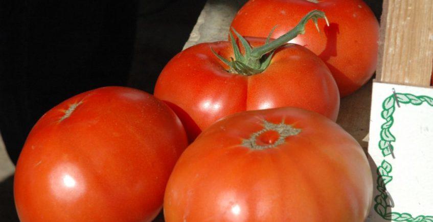 El tomate de Los Palacios alcanza en 2020 la mayor producción de su historia